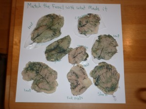 Matched up fossils